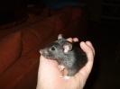 Schwarzi † am 09.11.2011