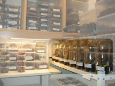 Obstbecher als Aufzuchtbox für Jungtiere :-)